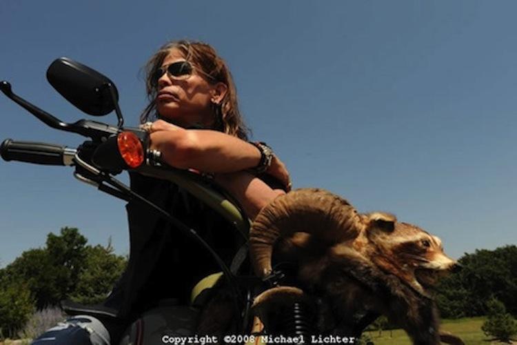 Steven Tyler, Dirico Motorcycles